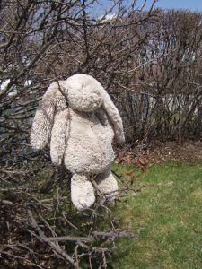 lost bunny